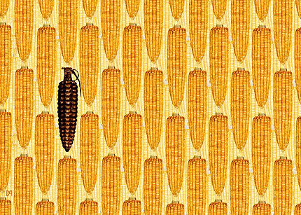 monsanto-s-gmo-corn-threatens1