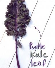 KALE-Front